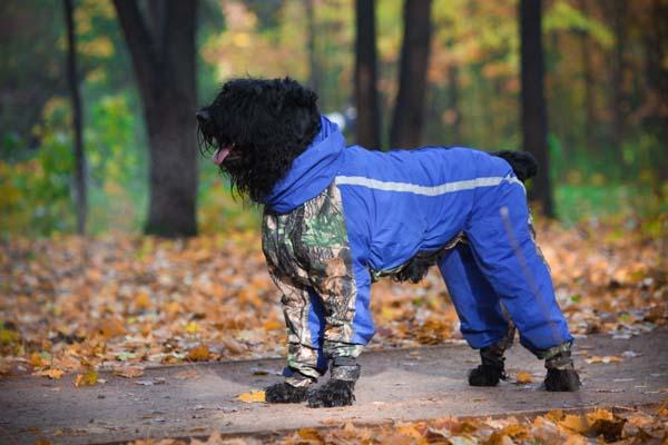 комбинезоны для собак фото
